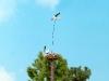 5481 Fliegender Storch Nest